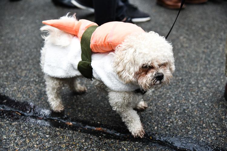 tompkins-park-dog-parade-2016-holloween-2
