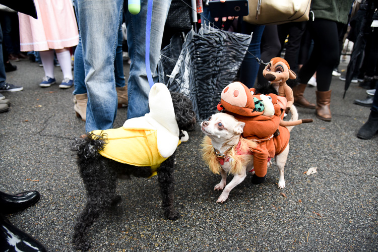 tompkins-park-dog-parade-2016-holloween-4