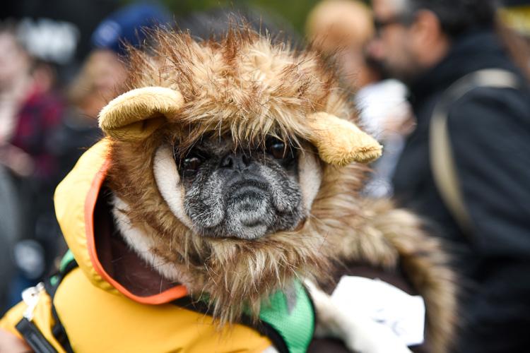 tompkins-park-dog-parade-2016-holloween-6