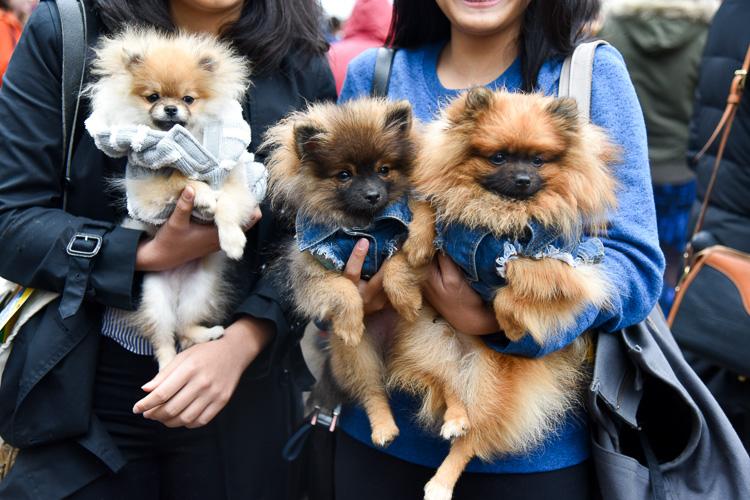 tompkins-park-dog-parade-2016-holloween-7