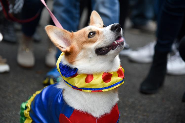 tompkins-park-dog-parade-2016-holloween-9