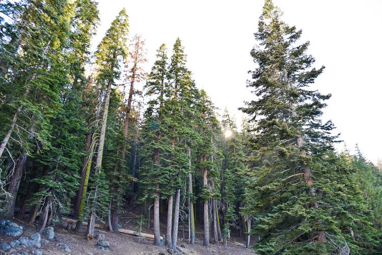 Visit Yosemite Park in 1 day