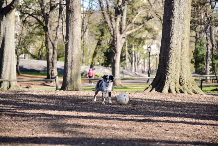 Adopter un chien à new york