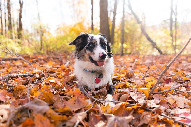 Fall trip near NYC - Hiking in Vertmont