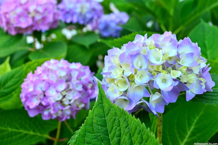 summer-flowers-photography-nature