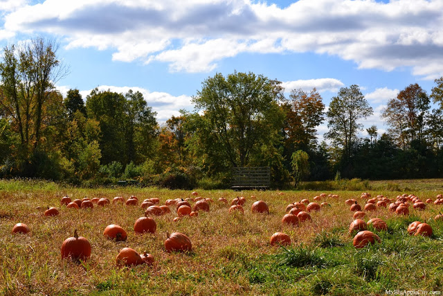 pumpkin-picking-nyc-mybigapplecity-2