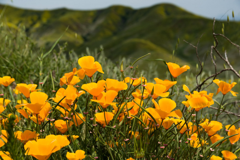 California - Chino  State Park