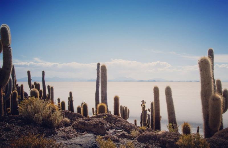 Bolivia - Isla Incahuasi - Salt Flats