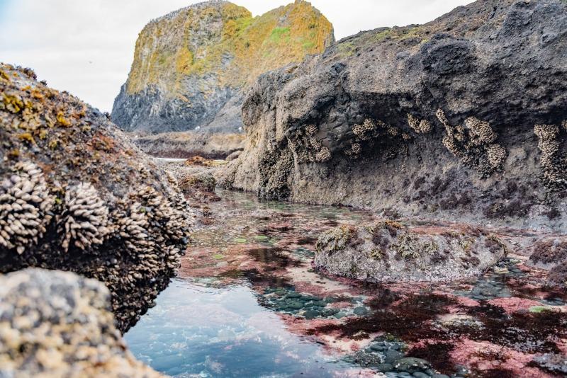 Oregon - tide pools at Yaquina Head Lighthouse