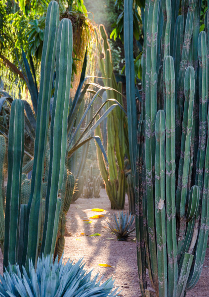 Morocco - Jardin Majorelle