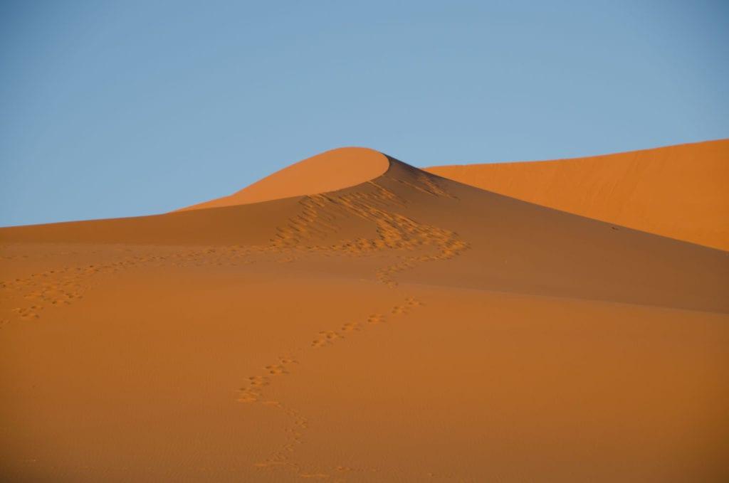 sahara-camel-ride-11-1024x679.jpg