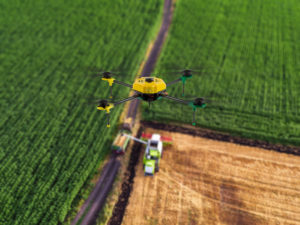Aerial view of the combine working on the large wheat field
