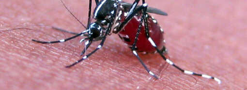 Weather Conditions Hinder Local Application of Aerial Spray Against Mosquito-Borne Virus