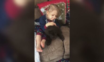 Ag Pilot Helps 2-year-old Missouri Heart Transplant Recipient Gets Puppy