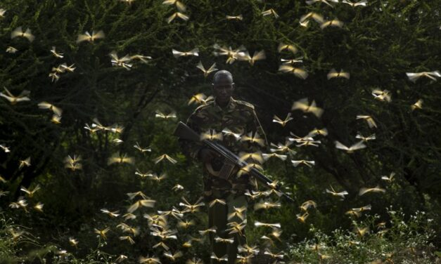 Kenya Spray planes combat the huge locust outbreak in East Africa
