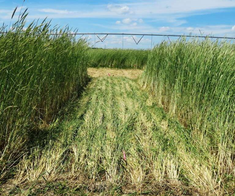 Cover Crops Play Vital Role in Soil Conservation