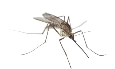 The battle against mosquitoes set to begin in Foxboro, rest of Norfolk County