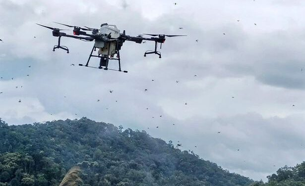 China deploys army of drones to fight locust swarms as farmland ravaged by bugs