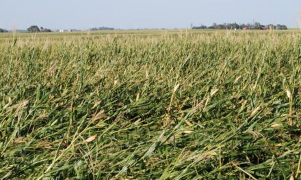 Cover crops can help damaged fields