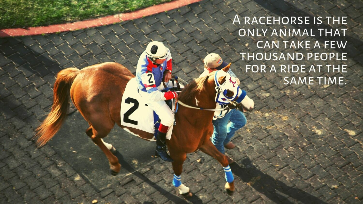 How Racetrack Routines Affect OTTBs: Training & Daily Life at the Track