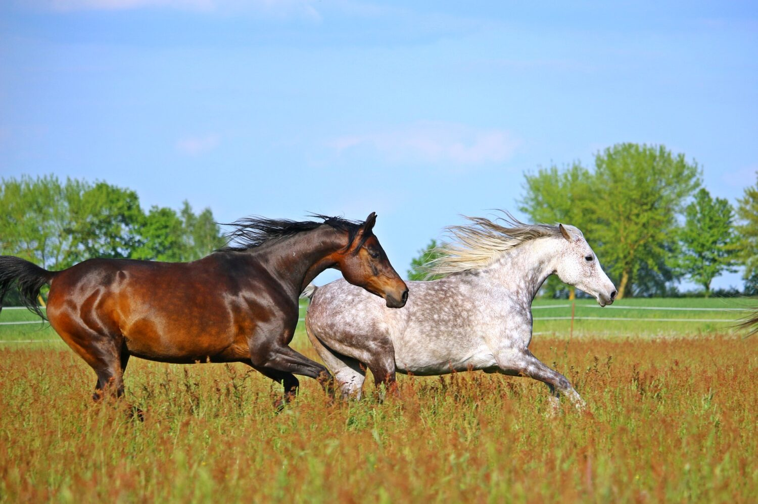 Training Your Horse for Correct Leads & Lead Changes