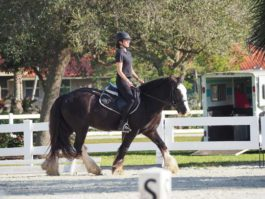 PHA-Dressage-Dec2018-PC098919