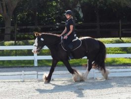 PHA-Dressage-Dec2018-PC098968