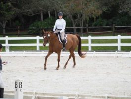 PHA-Dressage-Dec2018-PC099106