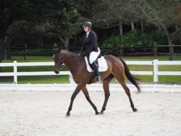 PHA-Dressage-Dec2018-PC099115