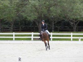 PHA-Dressage-Dec2018-PC099121