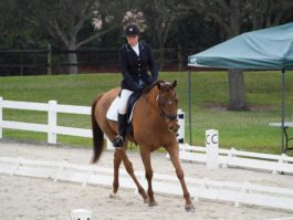 PHA-Dressage-Dec2018-PC099179