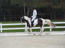 PHA-Dressage-Dec2018-PC099209