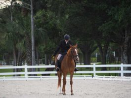 PHA-dressage-march2019-P3102217