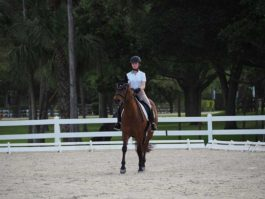 PHA-dressage-march2019-P3102230