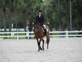 PHA-dressage-march2019-P3102261