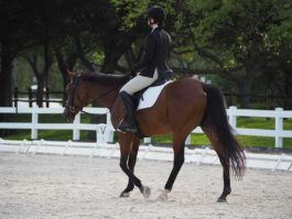 PHA-dressage-march2019-P3102266