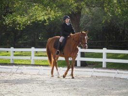 PHA-dressage-march2019-P3102340