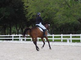 PHA-dressage-march2019-P3102488