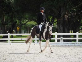 PHA-dressage-march2019-P3102742