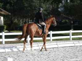 PHA-dressage-april2019-IMG_1049