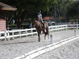 PHA-dressage-april2019-IMG_1472