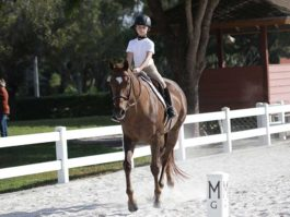 PHA-dressage-april2019-IMG_1476
