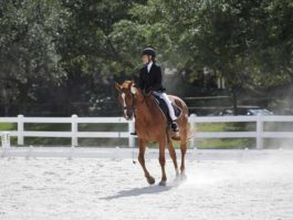 PHA-dressage-april2019-IMG_1670
