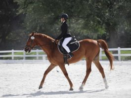 PHA-dressage-april2019-IMG_1673