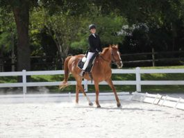 PHA-dressage-april2019-IMG_1679