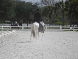 PHA-dressage-april2019-IMG_1749