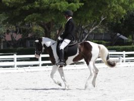 PHA-dressage-april2019-IMG_1848