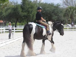 PHA-dressage-april2019-IMG_1954