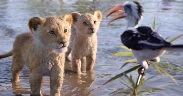 The Lion King bird
