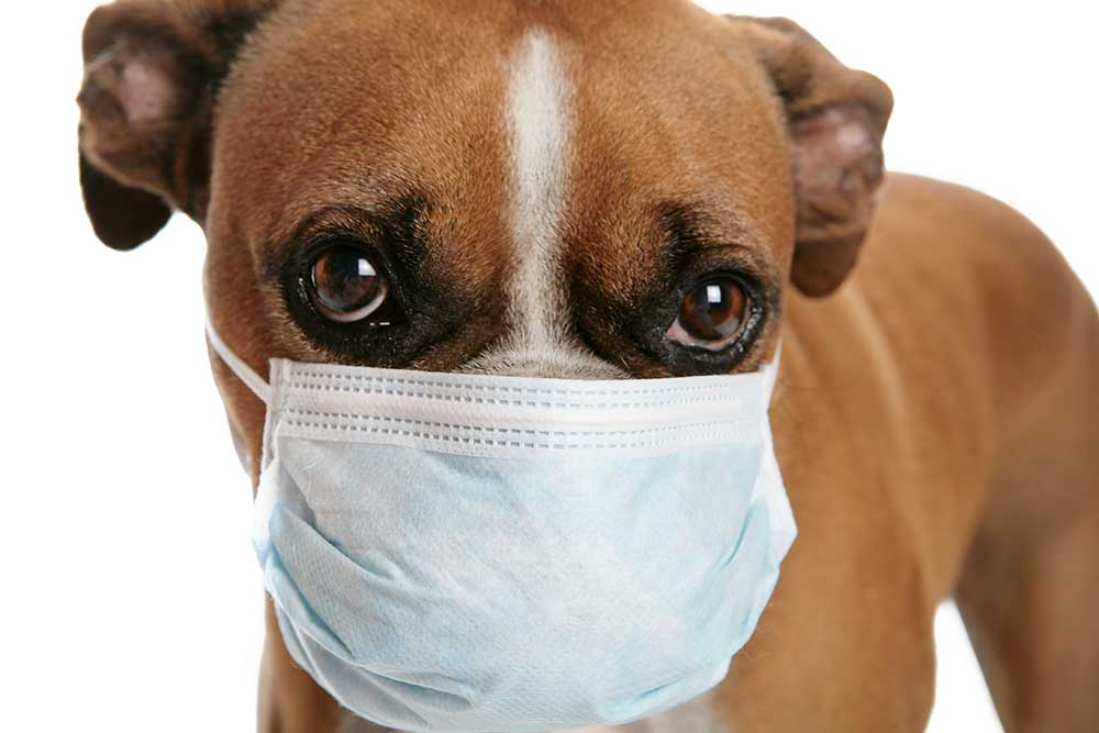 Coronavirus Should We Be Worried About Our Dogs And Cats The Oklahoma Eagle
